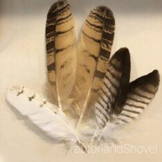 幸運を呼ぶ?フクロウの羽根