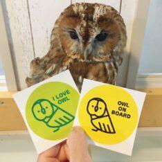I LOVE OWLステッカー(パステルパープルorグリーン)